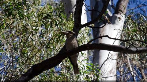 Kookaburra Wilpena pound