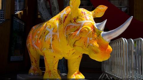 Rhinocéros jaune