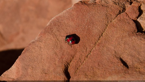 Kalbarri Bug